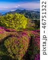 富士山 葛城山 躑躅の写真 46751322