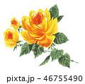 rose19102pix7 46755490