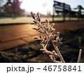 Hoar frost over the grass 46758841