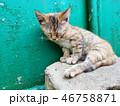 Cat closeup sleeping 46758871