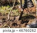 樹木 樹 ツリーの写真 46760262