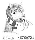 ラマ アルパカ スケッチのイラスト 46760721