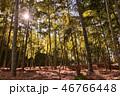 竹 自然 風景の写真 46766448