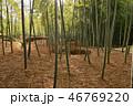 竹 自然 風景の写真 46769220