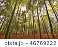 竹 自然 風景の写真 46769222