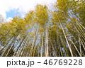 竹 風景 竹林の写真 46769228