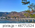 渡月橋 松 春の写真 46771524
