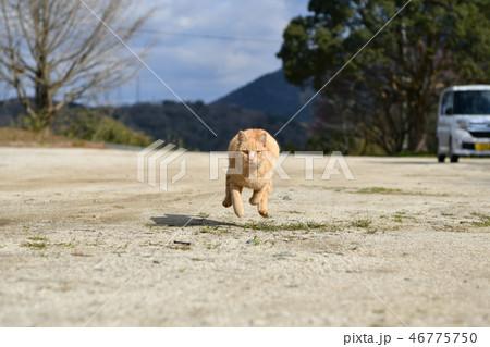 猫・野良猫・茶トラ・オス・走る・飛ぶ・飛行・砂を蹴る 46775750