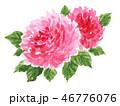 花 薔薇 ピンクのイラスト 46776076