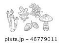 どんぐり ドングリ 団栗のイラスト 46779011