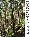 森の斜光 46785908