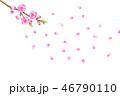 桃の花 水彩画 46790110