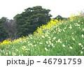 風景 海 花の写真 46791759