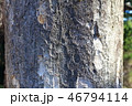 木肌 木膚 樹皮の写真 46794114