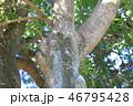 木肌 木膚 樹皮の写真 46795428