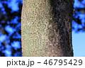 木肌 木膚 樹皮の写真 46795429