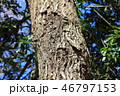 木肌 木膚 樹皮の写真 46797153