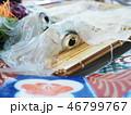 イカ 烏賊 刺身の写真 46799767