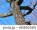 木肌 木膚 樹皮の写真 46800360