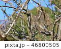木肌 木膚 樹皮の写真 46800505