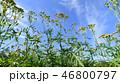 草 草原 草地の写真 46800797