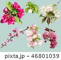 花 お花 フラワーの写真 46801039