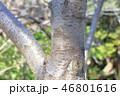 木肌 木膚 木の写真 46801616