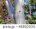 木肌 木膚 樹皮の写真 46802030