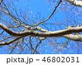 木肌 木膚 樹皮の写真 46802031