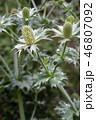 お花 フラワー 咲く花の写真 46807092