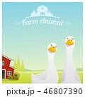 アヒル 農場 農業のイラスト 46807390
