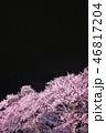春 花 桜の写真 46817204