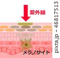 肌 断面 構造のイラスト 46817513