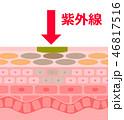 肌 断面 構造のイラスト 46817516