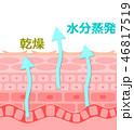 肌の断面 46817519