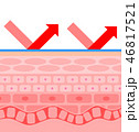 肌 断面 構造のイラスト 46817521