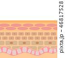 肌の断面 46817528
