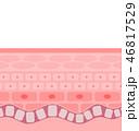 肌の断面 46817529