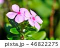 お花 フラワー 咲く花の写真 46822275