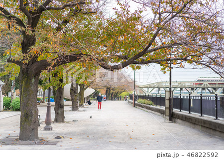 Cherry Blossoms Along the Sumida River 46822592