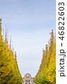 Ginkgo biloba leaf in the meiji jingu gaien park 46822603