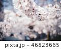 満開の桜 46823665