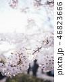 満開の桜 46823666