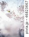 綺麗な光の中の桜 46823667