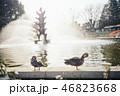 噴水の前にいる2匹の鴨 46823668