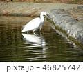 白色 黒色 池の写真 46825742