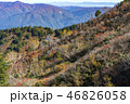 紅葉 秋 自然の写真 46826058