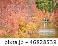 木 ツリー 樹の写真 46828539
