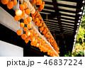 干し柿 柿 古民家の写真 46837224