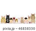 ネズミ 種類 ボーダー 46838330